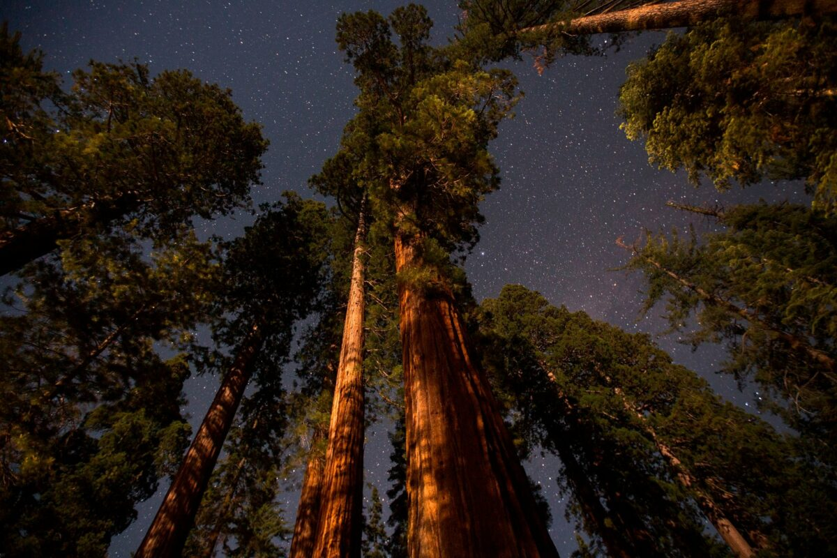 Baumwipfel im Nachthimmel