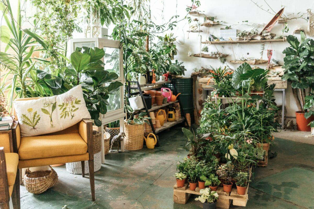 Pflanzen in einem Zimmer.