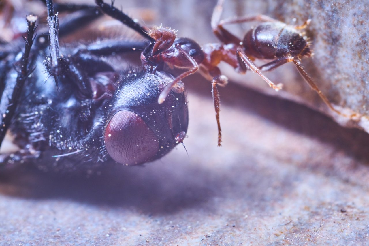 Insektensterben bedroht unseren Planeten. Doch wir können selbst etwas gegen die Ursache Lichtverschmutzung tun.