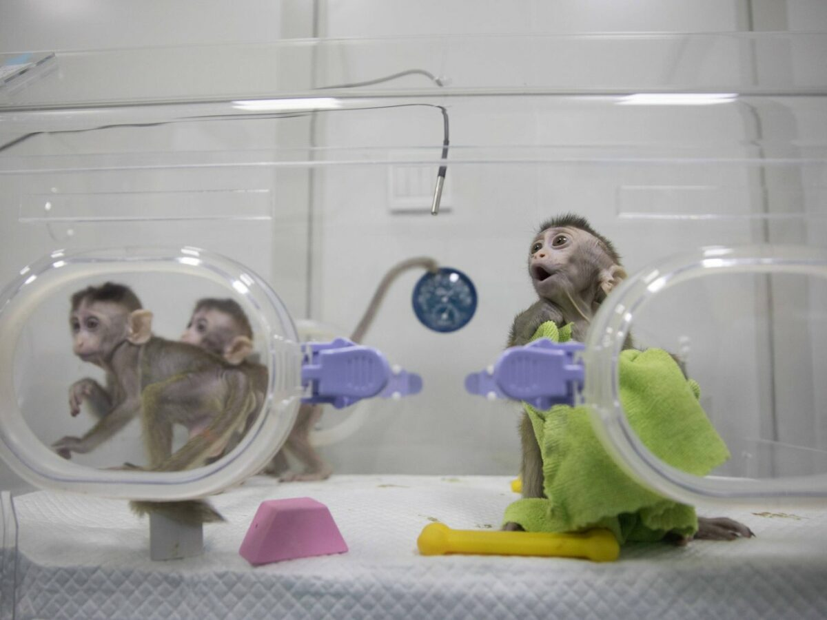 Affen in einem Labor