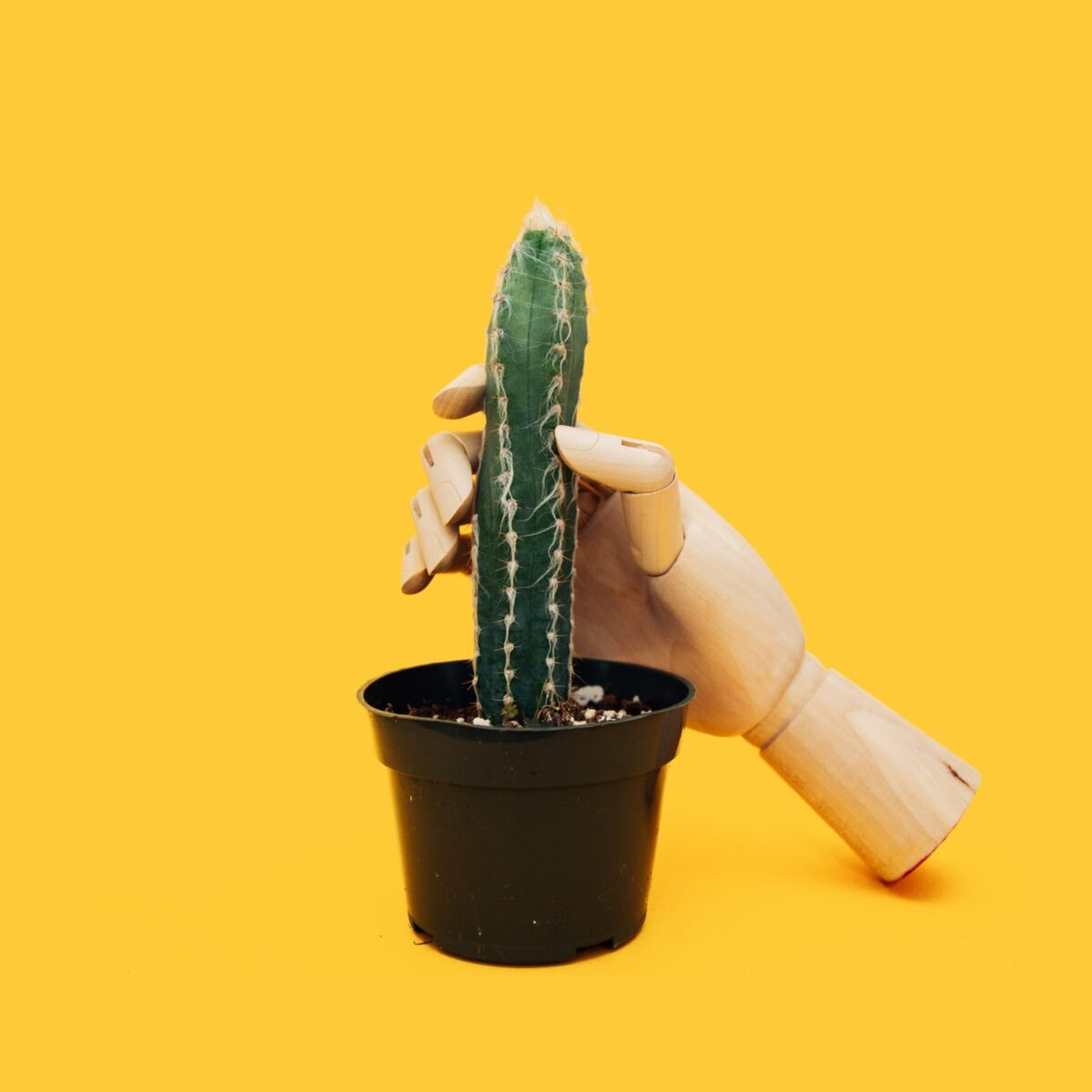 Hand an Kaktus
