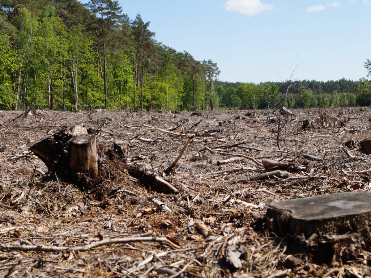 Gerodeter Wald