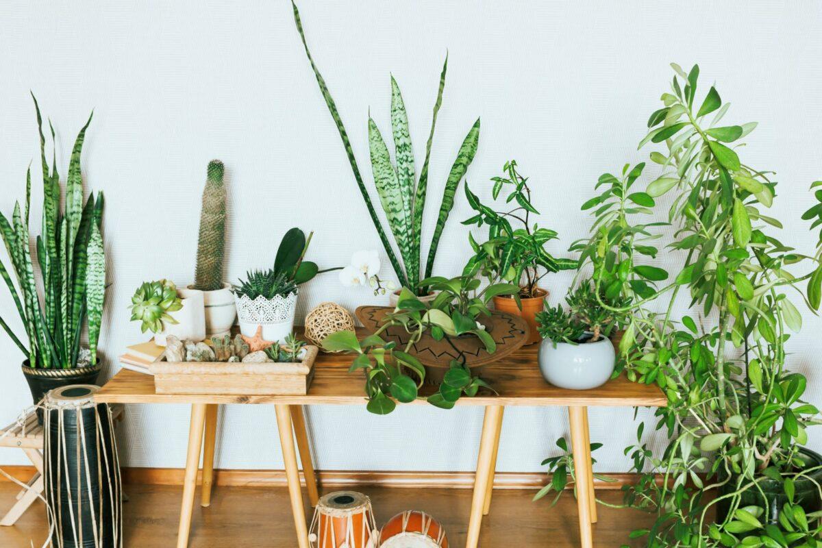 Zimmerpflanzen auf einem Tisch