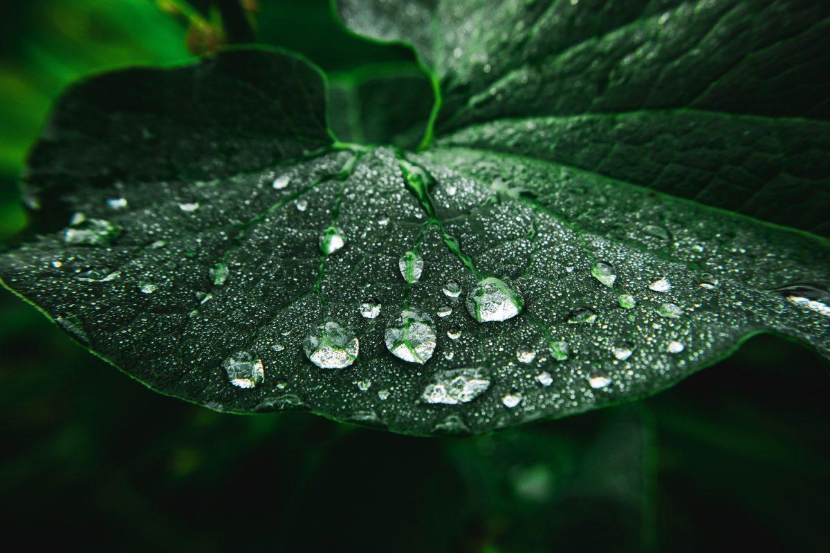 Wassertropfen auf einem Blatt.
