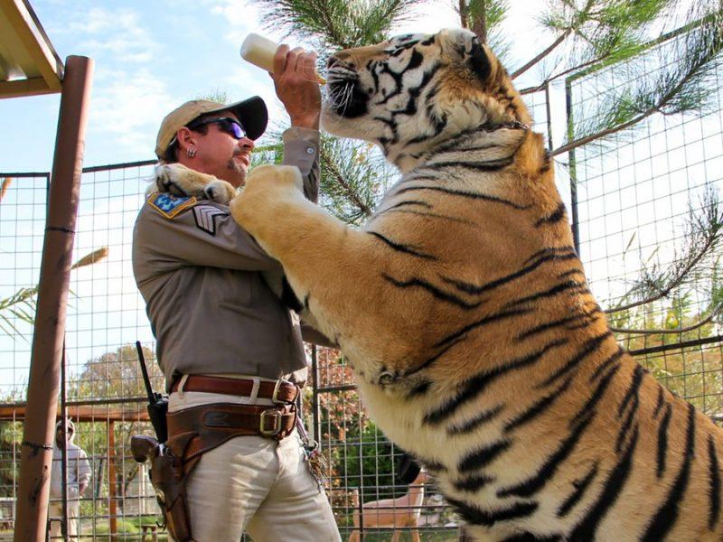 """Auch in """"Tiger King 2"""" geht es eher um Menschen als um Großkatzen.... © ©2020 NETFLIX"""